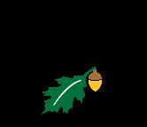 纽约州立大学-环境科学与林业科学学院